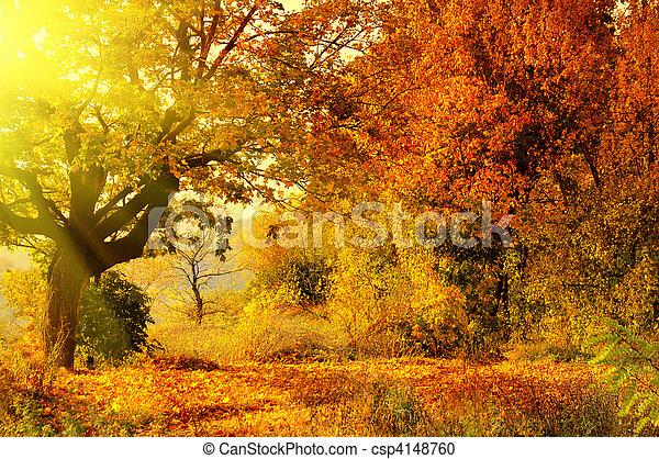 otoño, sol, bosque, rayo - csp4148760