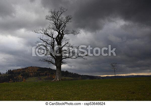 Árbol solitario en un día nublado de otoño - csp53646624