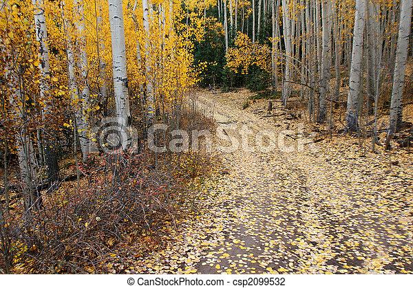 Autumn aspen - csp2099532