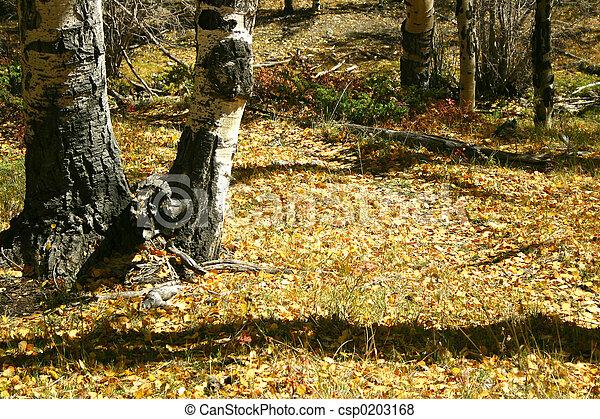 Soleado camino de otoño - csp0203168