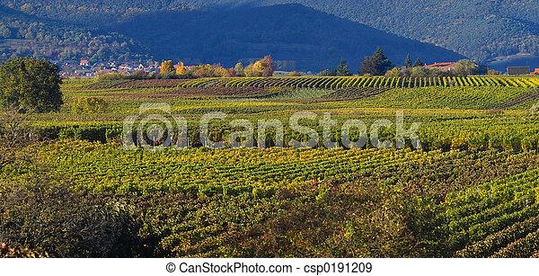 otoño, wineyards - csp0191209
