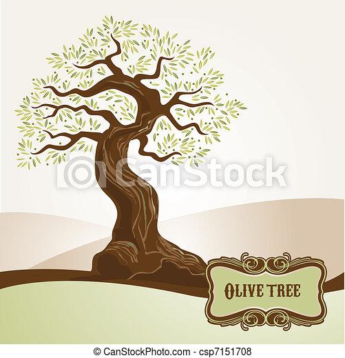 oud, olijf boom - csp7151708