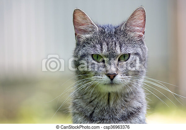 Outdoor portrait of cat - csp36963376