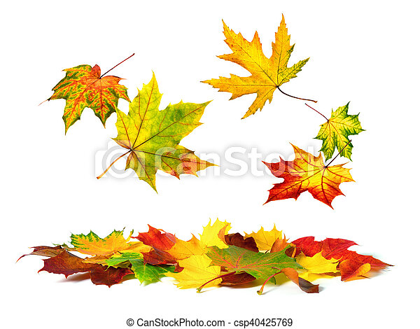 outono, baixo, folhas, queda, coloridos - csp40425769