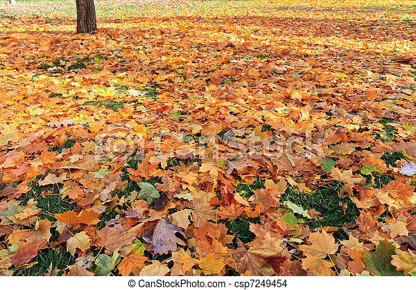 outono - csp7249454
