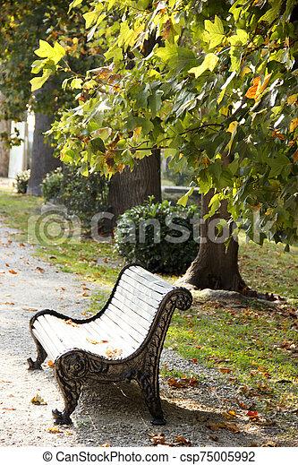 outono, banco, ruela, parque, vazio, folhas, maple, strewn, outono, experiência. - csp75005992