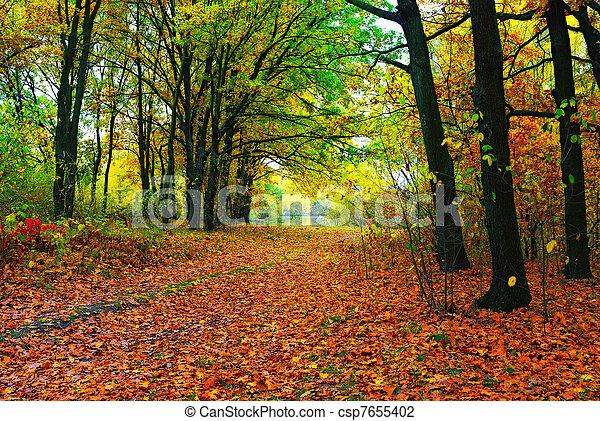 outono, caminho, coloridos, árvores - csp7655402