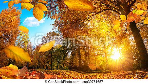 outono, dourado, folhas, cena, queda - csp39781657