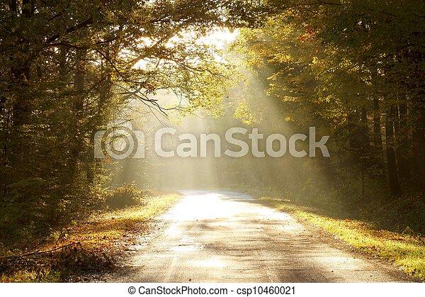 outono, encantado, alvorada, floresta - csp10460021