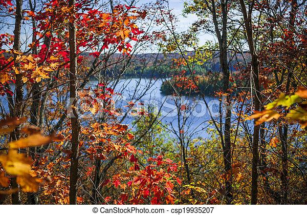outono, floresta, lago - csp19935207