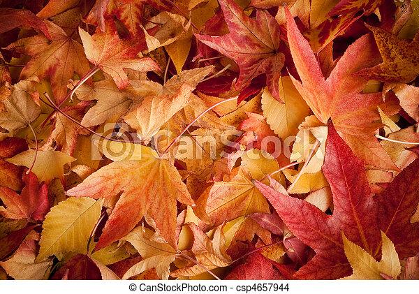 outono, folheia - csp4657944