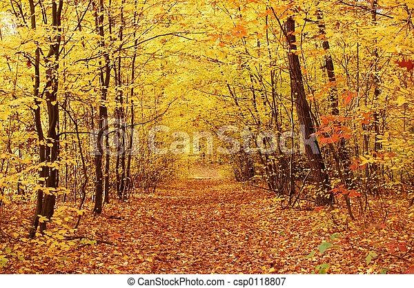 outono - csp0118807