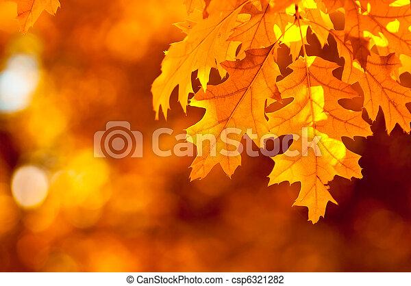 outono, muito, foco raso, folhas - csp6321282