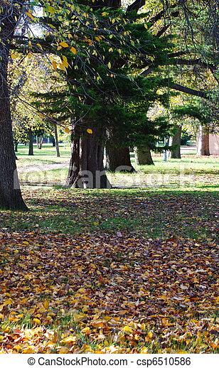 outono, parque - csp6510586