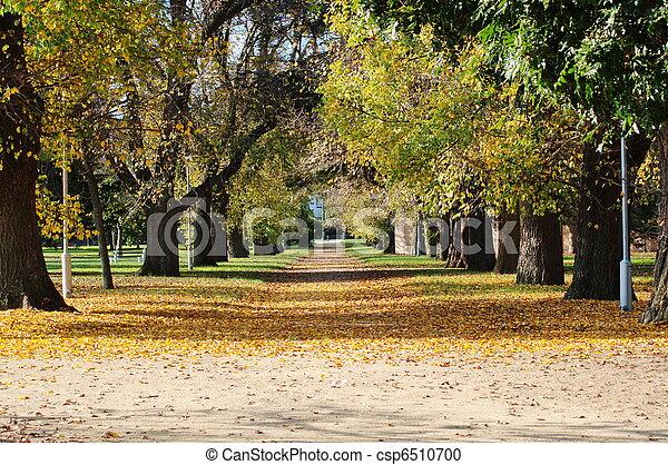 outono, parque - csp6510700