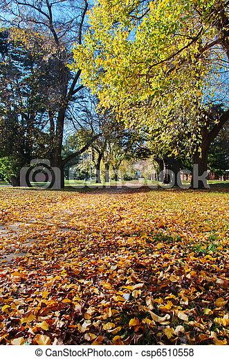 outono, parque - csp6510558