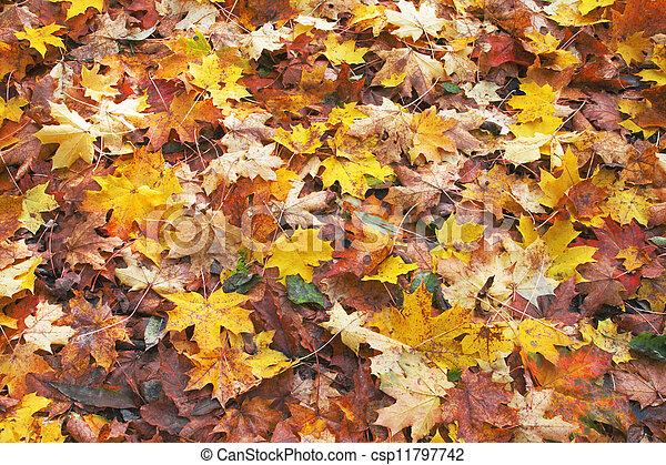 outono sai, caído - csp11797742