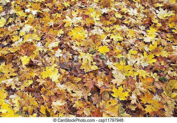 outono sai, caído - csp11797948