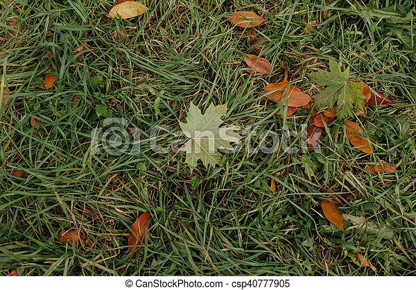 outono sai, caído - csp40777905
