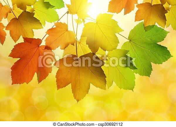 outono sai - csp30692112