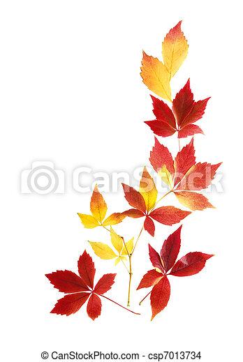 outono sai, limpo, arranjo - csp7013734