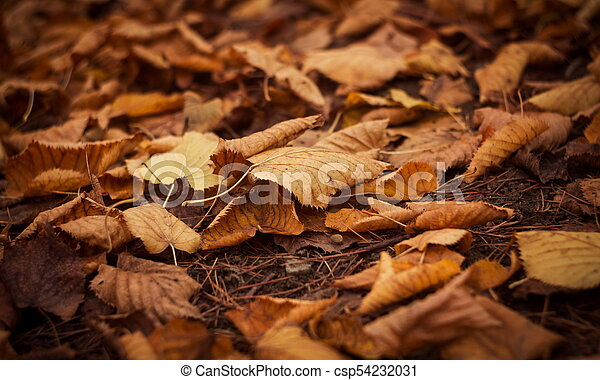 outono sai, parque - csp54232031