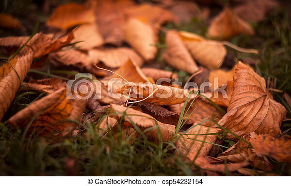 outono sai, parque - csp54232154