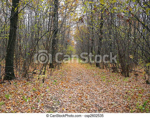 outono, selva, floresta, estrada - csp2602535