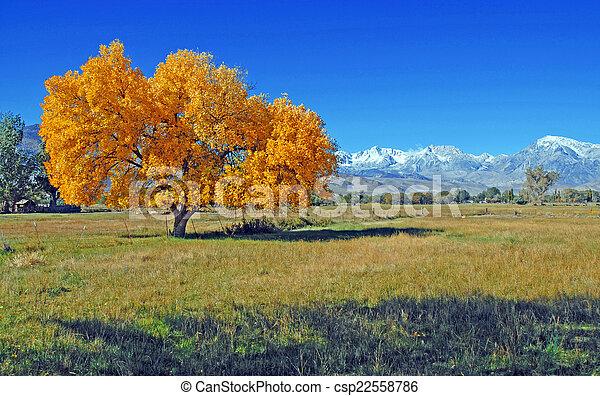outono, sierra, oriental - csp22558786