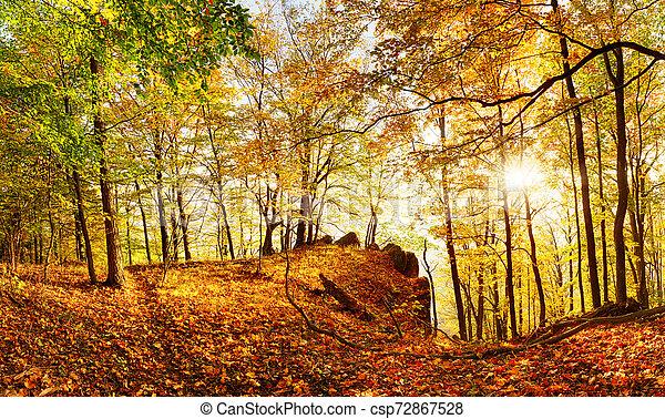 outono, sol, floresta, landcape - csp72867528