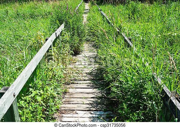 Overgrown long wooden boardwalk - csp31735056