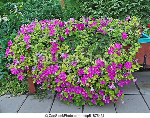 Bloemen In Pot.Overvloed Planten Buiten Paarse Groot Pot Bloemen