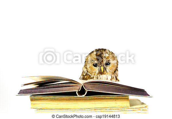 Owl at a stack of books - csp19144813