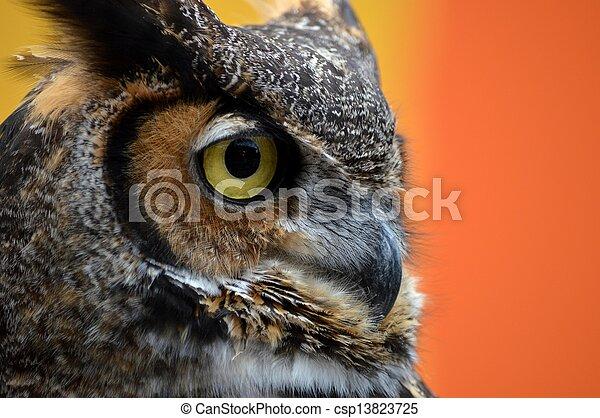Owl Eye 2 - csp13823725