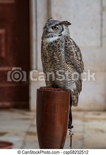 owl in captivity - csp58232512