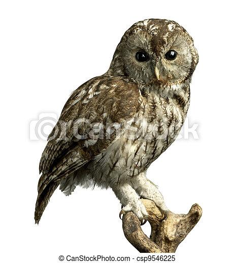 owl on a perch - csp9546225