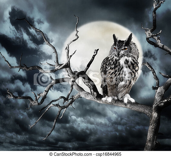 Owl On A Tree At Night - csp16844965