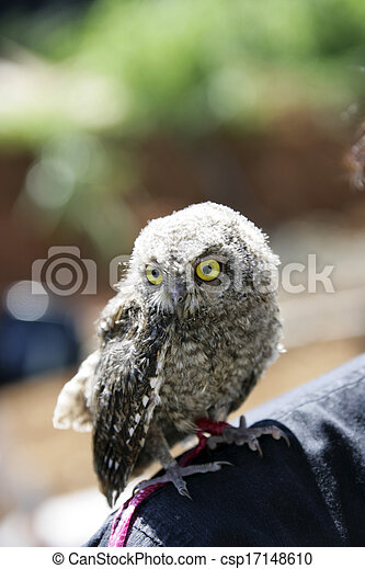 Owl on the shoulder - csp17148610