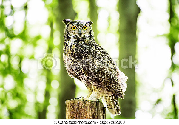 Owl on the Stump in Forest - csp87282000