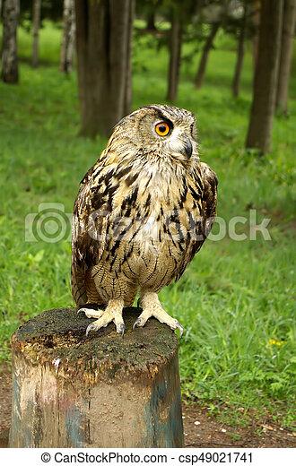 Owl sitting on a tree stump - csp49021741