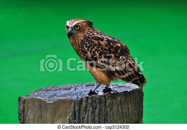 Owl - csp3124302