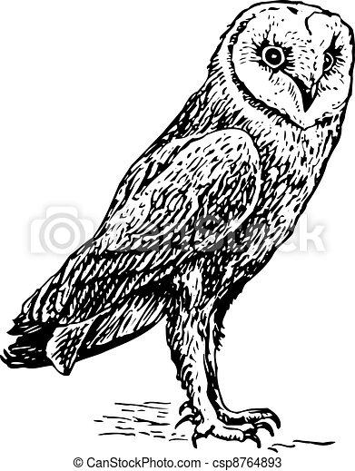 Owl tyto alba - csp8764893