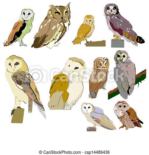 Owls - csp14486436