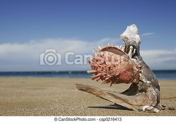 Oyster Beach - csp0216413