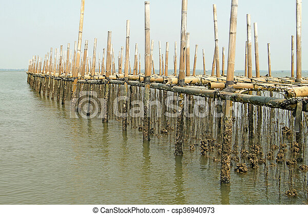 oysters farm in the sea - csp36940973