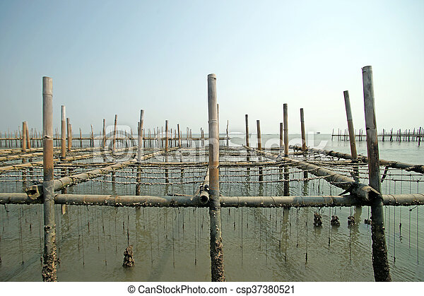 oysters farm in the sea - csp37380521