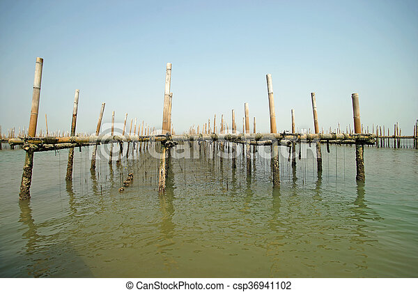 oysters farm in the sea - csp36941102