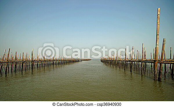 oysters farm in the sea - csp36940930