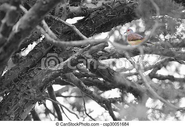Un pájaro en un árbol - csp30051684