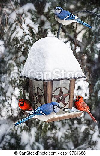 Pájaros comiendo aves en invierno - csp13764688